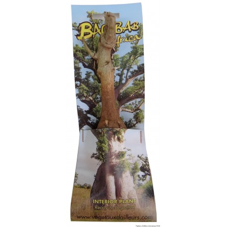 "50 x Kit Baobab ""LE PETIT PRINCE"" PM (photo non contractuelle) 2ans, 4kg,H:20, l:3"